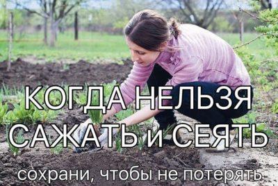КОГДА НЕЛЬЗЯ САЖАТЬ и СЕЯТЬ  Народные приметы для садоводов-огородников!