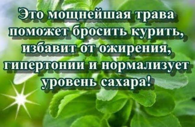 Хотите бросить курить Эта трава мгновенно избавит от этой привычки и от ожирения, диабета и гипертонии