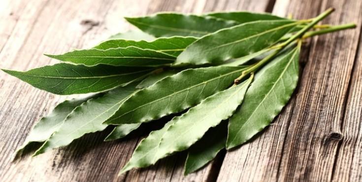Экологичный лосьон из лавра для молодости и упругости кожи