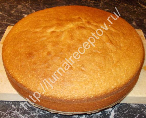 бисквит для торта фото