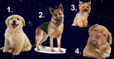 Выберите собаку и узнайте, какой мужчина для вас идеально подходит!