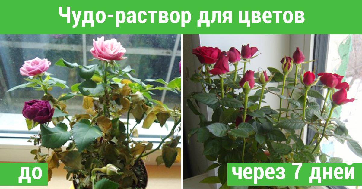 Цветок увядал не по дням, а по часам… Всё поменялось с использованием этого суперсредства!
