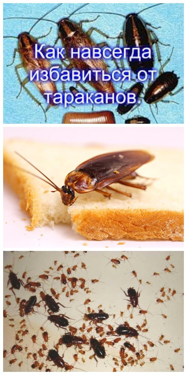 Как избавиться от тараканов в квартире быстро и навсегда